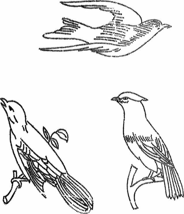 Вышивка гладью птицы схемы для начинающих 13