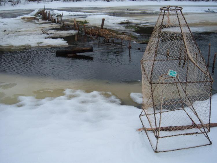 как ставить морду для ловли рыбы